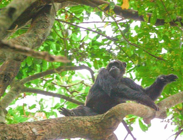 Touchdown Afrika og sjimpansetrekking