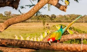 Søvnløs i Pantanal
