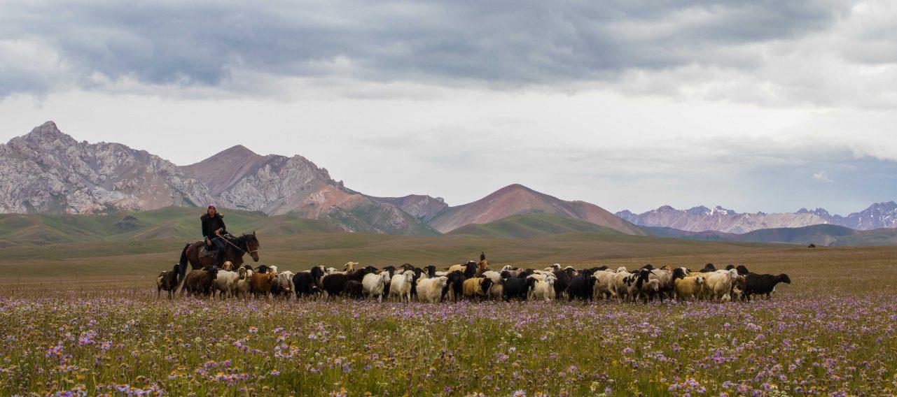 Song-Köl Kirgisistan