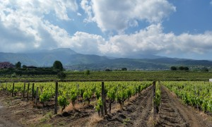 I Gudfarens fotspor på Sicilia