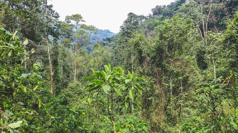 Bwindi Nasjonalpark, Uganda