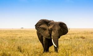 Dra til Afrika i sommer