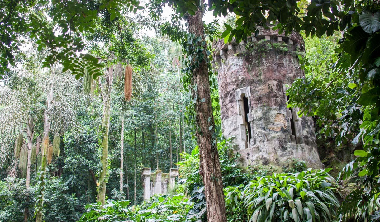Tijuca-skogen i Rio de Janeiro