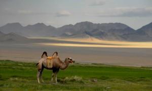 På bucketlista: Mongolia