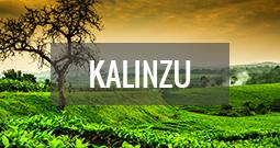 Kalinzu
