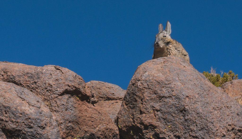 Atacama Bolivia