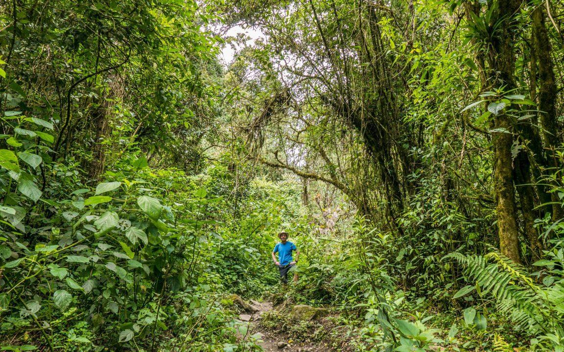 Cocora-dalen Salento